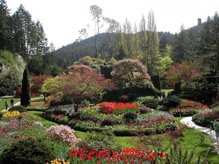 Низкорослые цветы для клумбы цветущие все лето названия