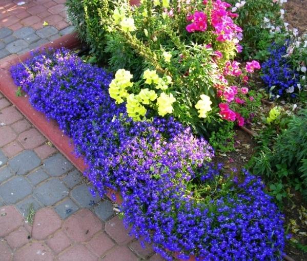 Клумбы цветов в нашем саду